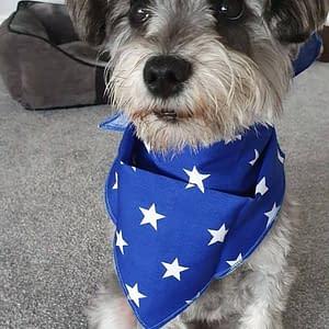 Blue & White Stars Dog Bandana