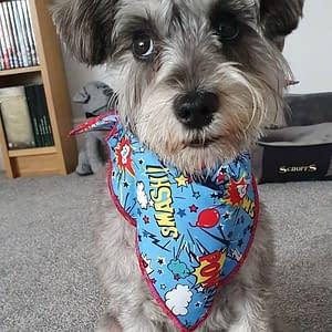 Super Hero Dog Bandana