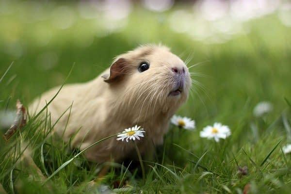 Small Pet Care Northallerton