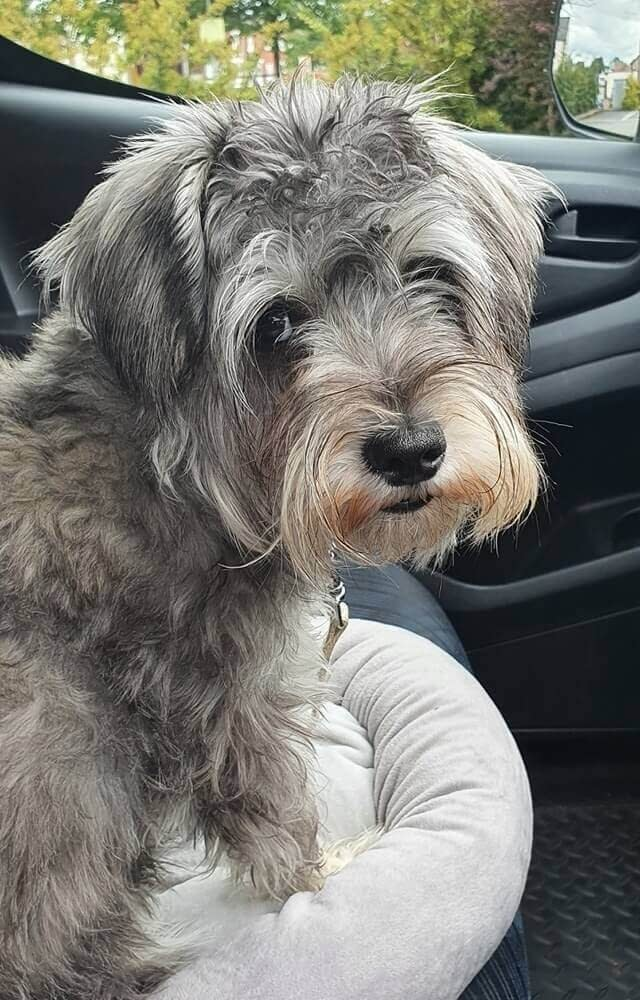 Dog Care Northallerton