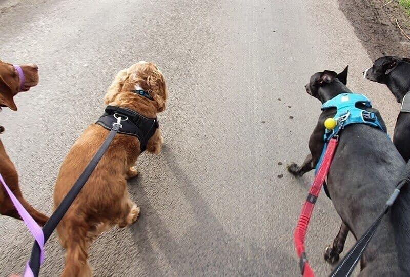 Dog Care Near Leeming Bar Village