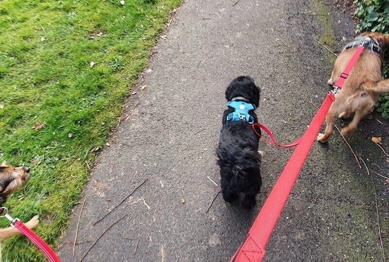 Dog Walker In Leeming Bar Village