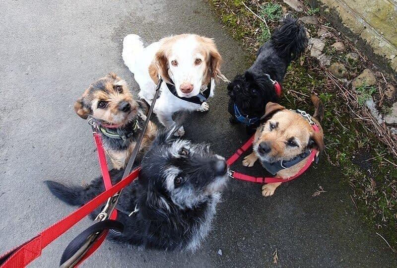 Pet Carer In Northallerton
