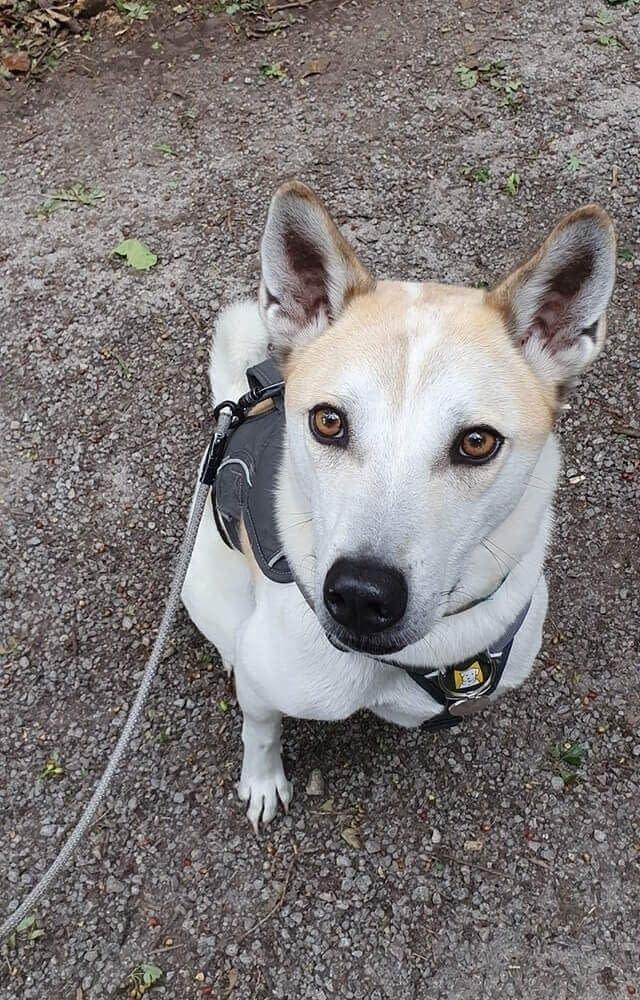 Dog Care Services Near Northallerton