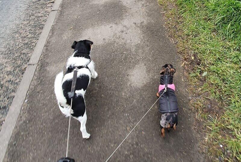 Dog Walker Around Northallerton
