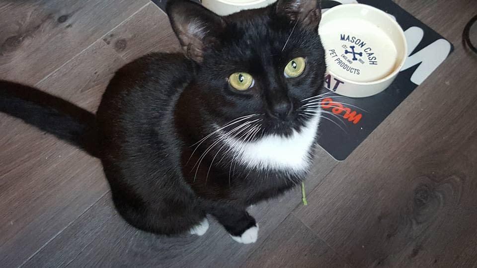 Cat Sitter Bedale